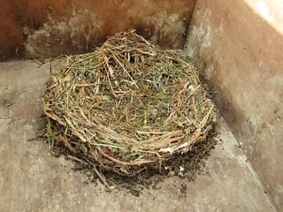 Het nest in nestkast 2 na het schoonmaken van de nestruimte, 27 april 2018