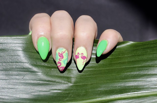 flamingo kynnet nails