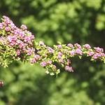 20180514-163025 - Spring Garden Bokeh