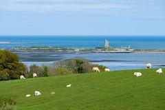Carte Postale de la Normandie, le vert, le bleu et les vaches