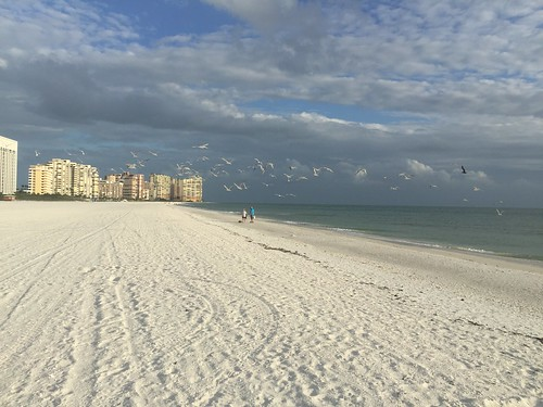 explored inexplore landscape horizon coast birds sky clouds marriott whitesand longwalks seashells perfectcreation nature life getaway vacation florida iphone6plus seagulls beach marcoisland