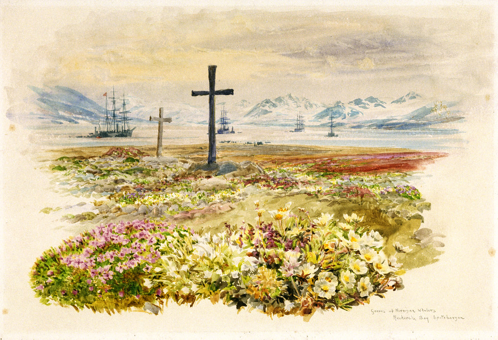 Drawings with colour notes of graves of Norwegian whalers, Rechirck Bay, Spitzbergen (1907)
