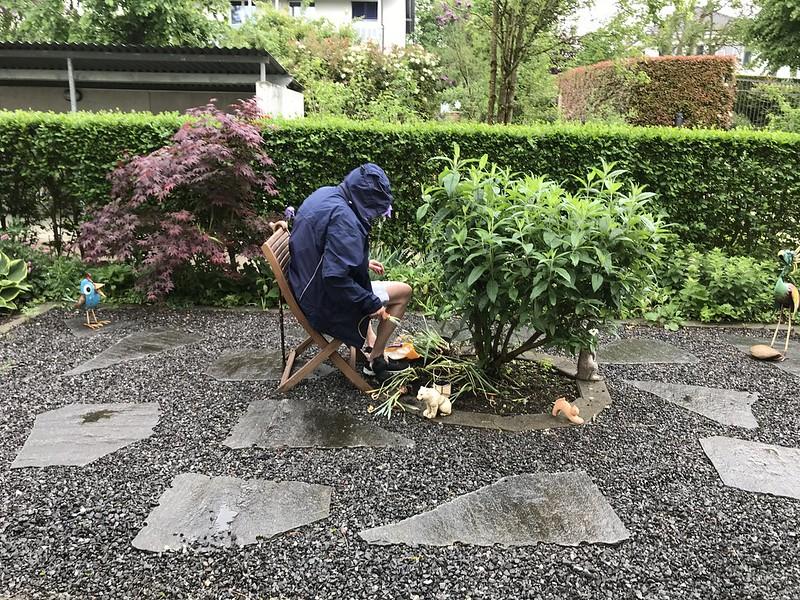 Planting Daffodils