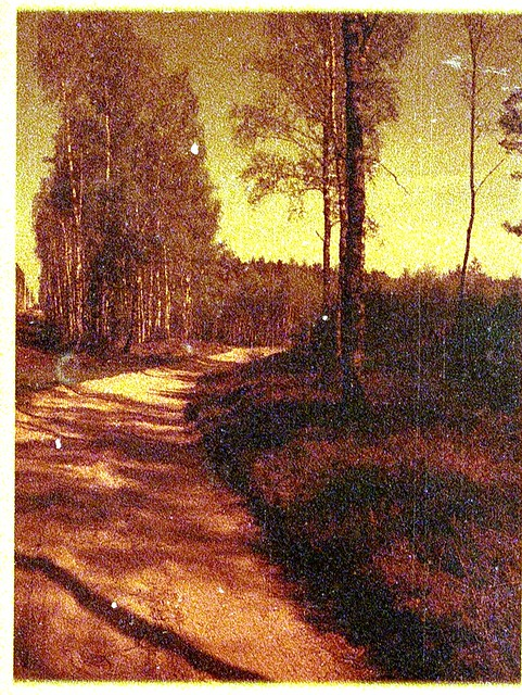 May 2018. Tuchola Pinewoods Part 4. PENTAX AUTO 110