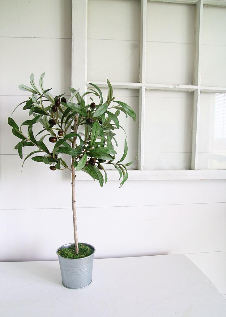 Olive Tree in Pot