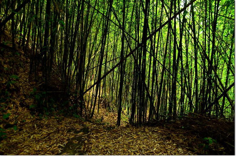 牛山竹林小徑