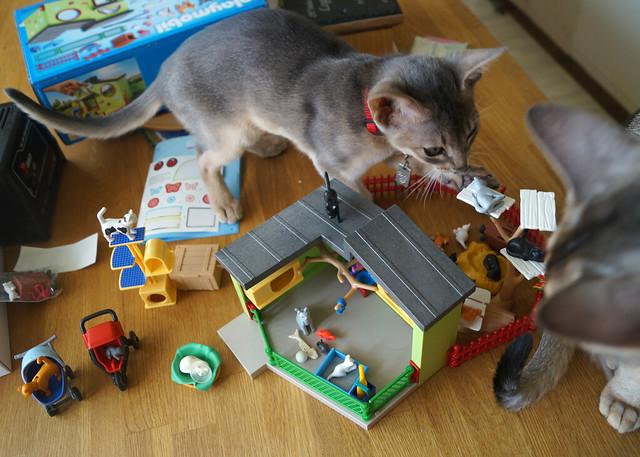 roryfreddyplaymobilcatsC05070