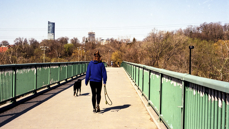 Saturday Morning Dog Walk Across the Don Valley