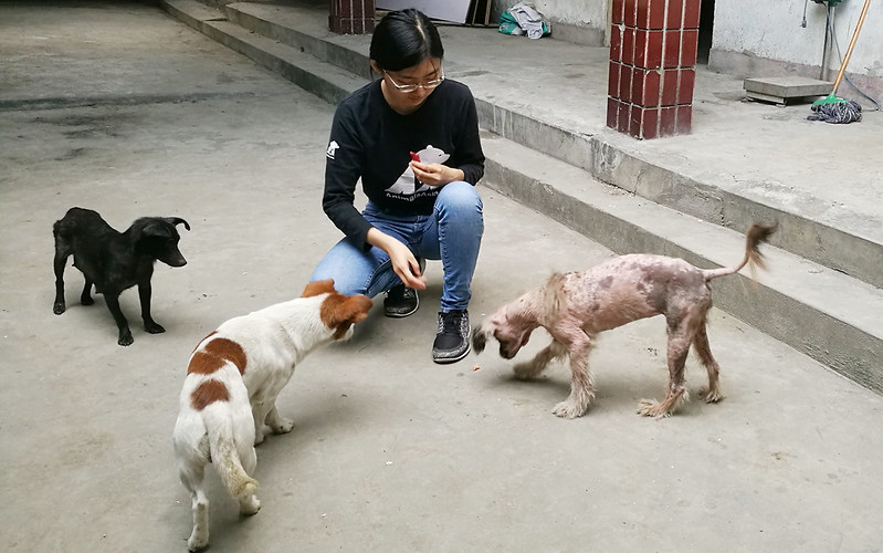 Veterinary Intern Chen Si Wen with rescued dogs at CBRC