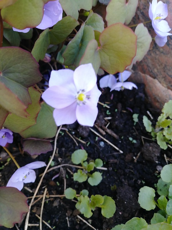 Le jardin de Lavandula 2018 - Page 4 41276630604_3f74c11fb9_c