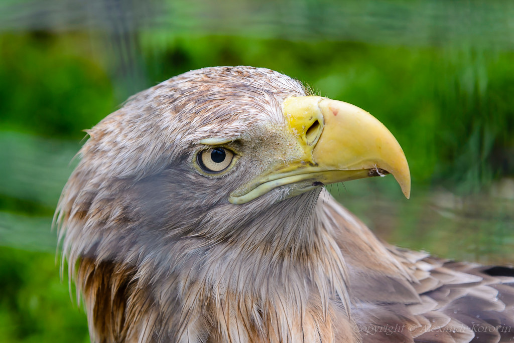 20160611_115241_парк птиц