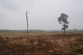 927 Kale Duinen - Aekingerzand