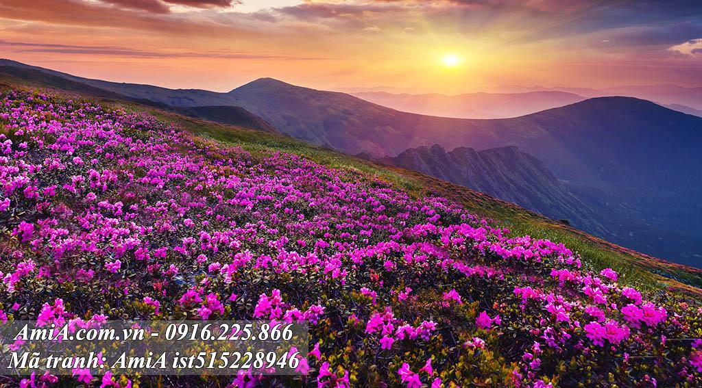 Tranh phong cảnh thiên nhiên đồi hoa nắng đẹp