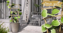 hive // lucky heart plant . group gift | mainstore