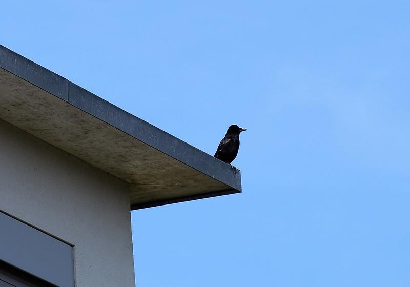 Crow 22.05 (1)