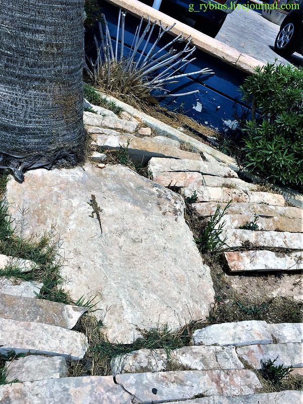 Ящерица Кипр