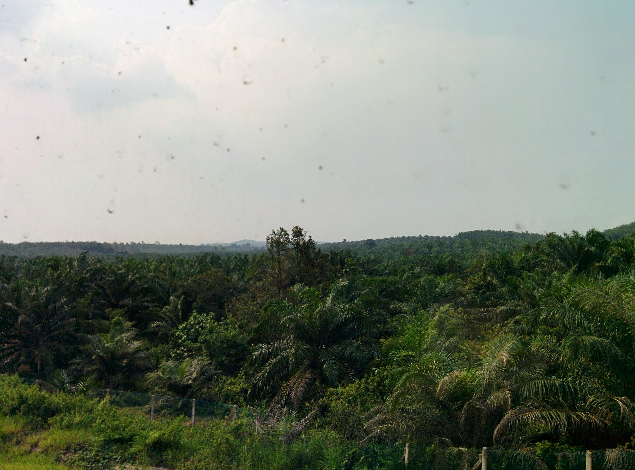Jungle scenery from the train