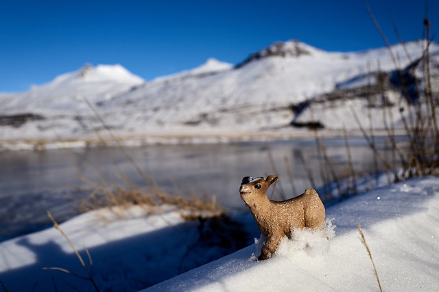 Sometimes baby goat wishes he had Snow Hooves