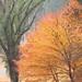 1381-b-20171130-IMG_1262-奈義町 菩提寺の紅葉(40D,EF-18-200mm)撮って出し.jpg