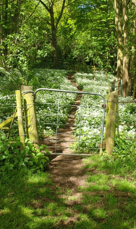 Malvern_wildflowers_gate