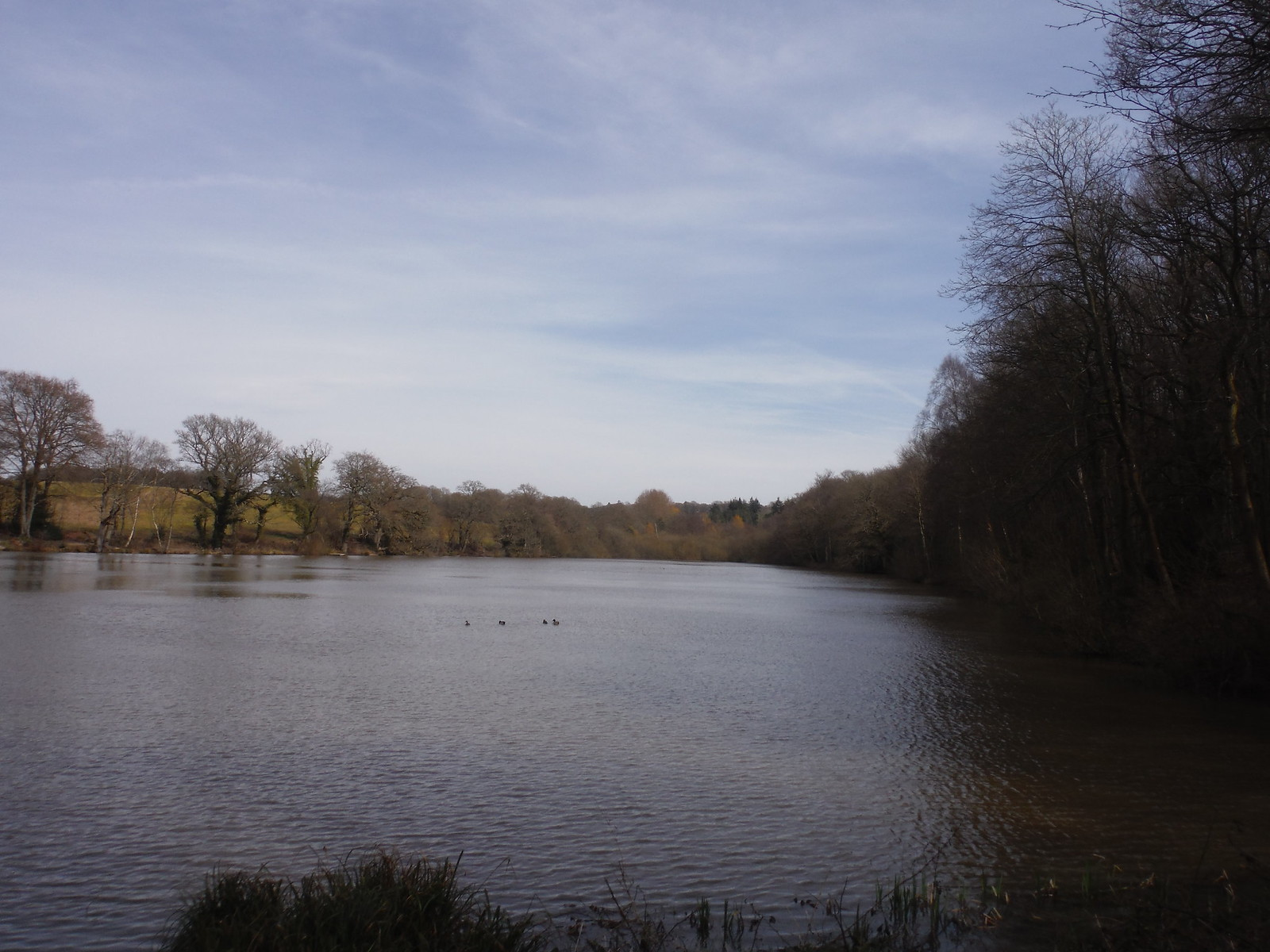 Largest in Chain of Fishing Ponds north of Horsted Keynes SWC Walk 27 - East Grinstead to Wivelsfield or Sheffield Park