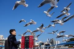 Seagull's raid