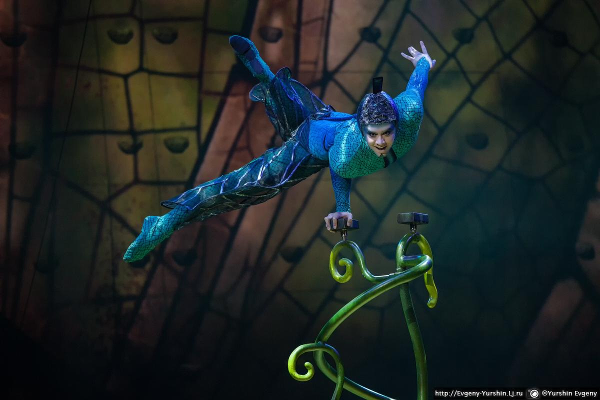 Cirque du Solei. Шоу OVO