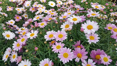 Viel buntes im Gartencenter / Many colorful in the garden center / Beaucoup coloré dans le centre du jardin