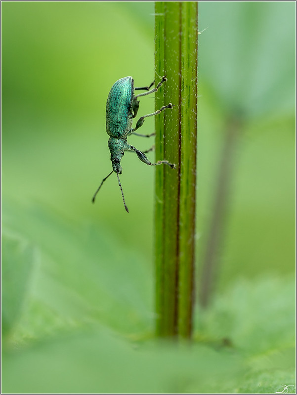 Envie d'insectes 41400324825_edbd99d09e_c