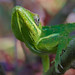 Backyard lizard