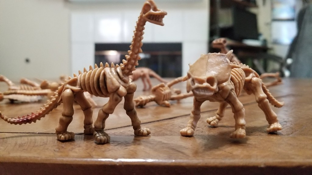 Direct Sales Support Center » A Look at Dinosaur Skeleton Dinosaur