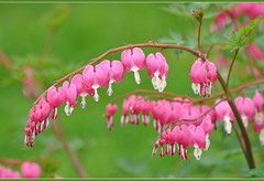 Весна-красна (Spring-red)