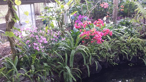 Botanical Garden, Tokiwa Park, Ube