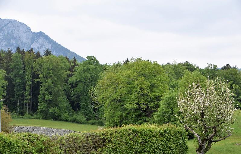 Feldbrunnen 02.05 (20)