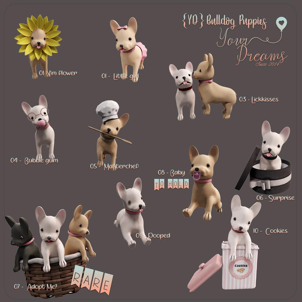 {YD}Bulldog Puppies - TeleportHub.com Live!