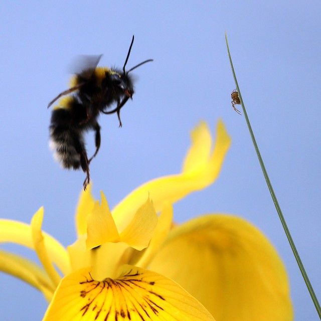 Day of the bee IV