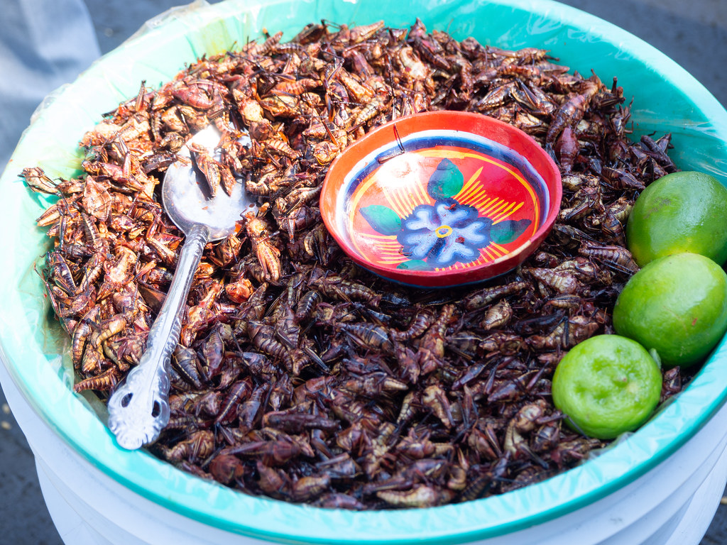 Fried grasshoppers anyone?