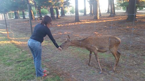 2018-01-20_1939.19_Feeding_deer