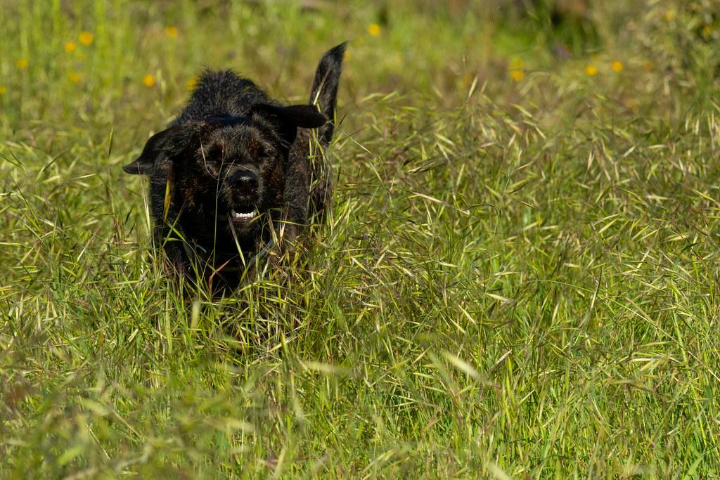 Wally the Dog