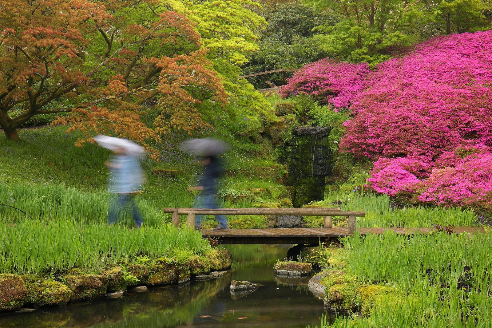 Japanese Water Garden, Wakehurst Place