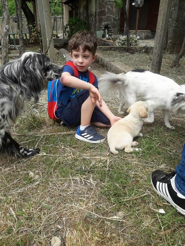 Giornata in ricordo di Flora, cagnolina uccisa a Sanza