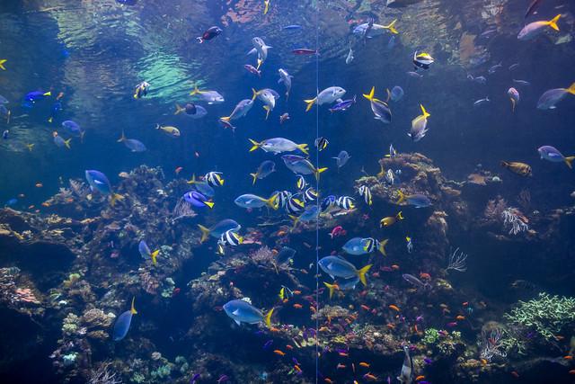Aquarium of California Academy of Sciences, Golden Gate Park, San Francisco, California, USA