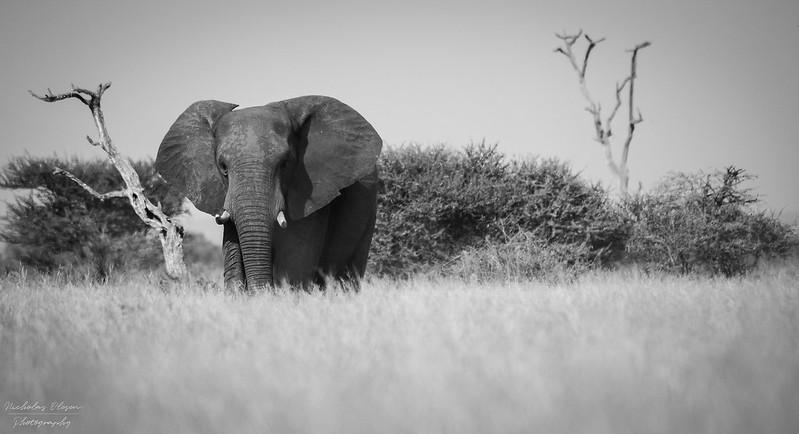 South Africa | Kruger Elephant