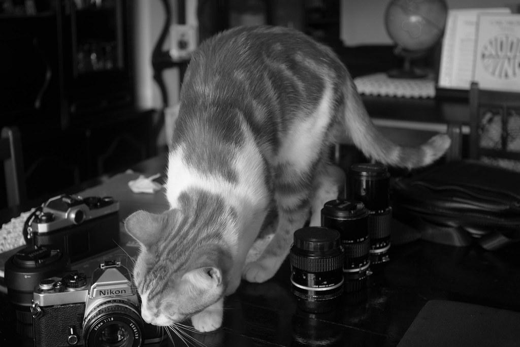 A curiosidade fotografiou ao gato