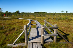 Walking path in bog, Latvia