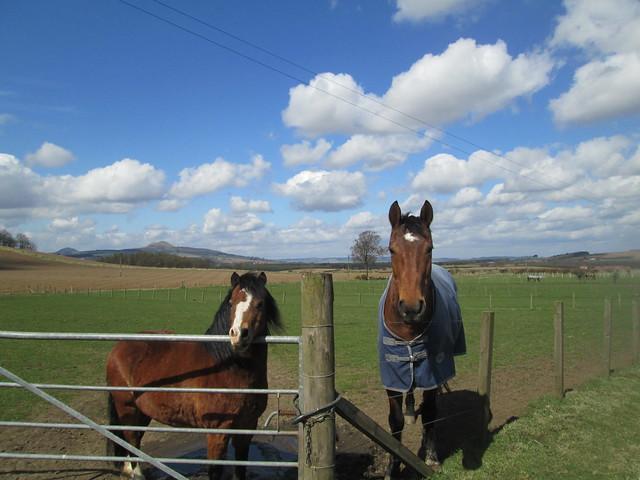 horses , Fife