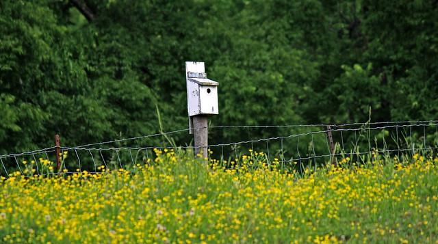~ The Blue Bird Box ....