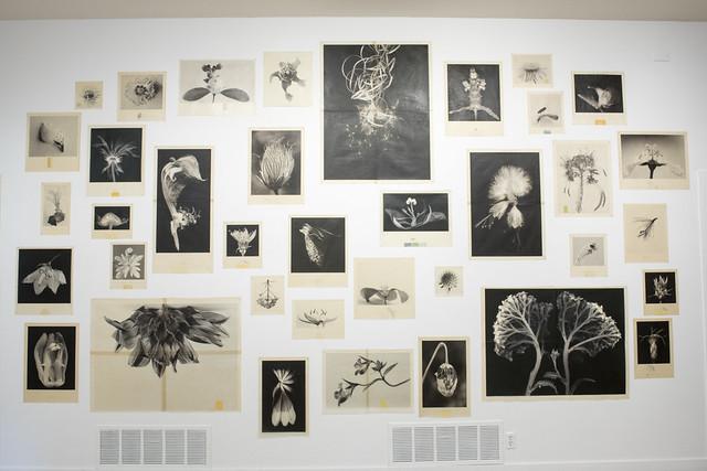 2018 Bees BIG IDEA Project & Visual Arts Exhibition