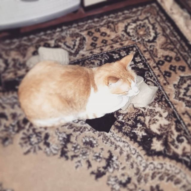 """""""Ура! Носки!"""" - радовался Феликс. Сначала он по ним катался, кувыркался, тёрся об них. Потом немножечко их убил (охотник!) Теперь вот улёгся, довольный, и лежит. Всё же """"облежать"""" хозяйские вещи - это для кошек святое."""