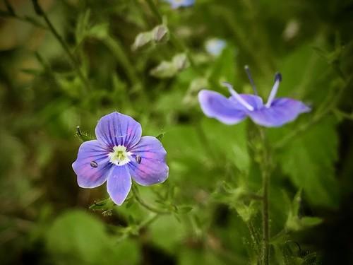 Beautiful flowers in blue